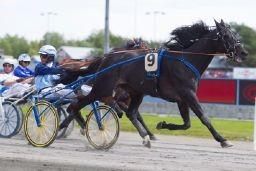 Ser Frode Hamre og I'm The Answer langt etter konkurrentene i V76-1 på onsdag? (begge foto: hesteguiden.com)