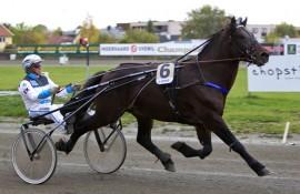Spang Draupner jakter karrierens sjette seier i dag (foto: hesteguiden.com)