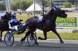 Ulsrud Tea og Sven Ove Wassberg jakter årets tiende triumf (foto: hesteguiden.com)