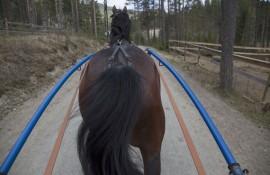Det var ingen bakdel å eie denne supertraveren (foto: hesteguiden.com)