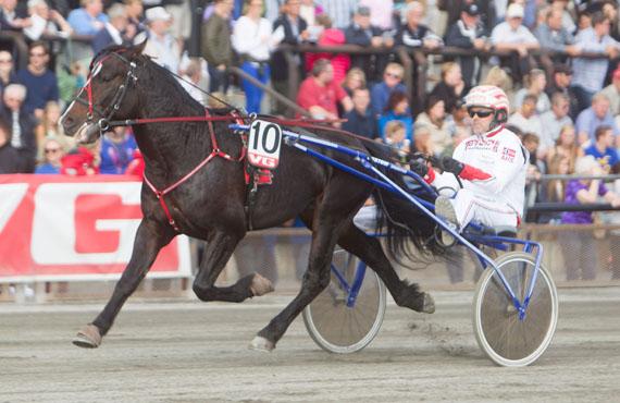 Holder Fjord Jerven unna i V75-6? (foto: hesteguiden.com)