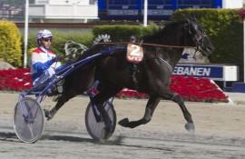 Tidligere norskeide Gladiator Gull blir favoritt i V4-1 (foto: hesteguiden.com)