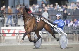 Tar stilige Caprino B.R. en ny Bjerkeseier i V76-3 sammen med sin trener og kusk Bo Westergård onsdag? (foto: hesteguiden.com)