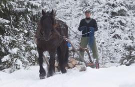 Tross mye hardt arbeid i skogen er Finnskog Sjefen klart best på sprint. Kan Henrik Kulblik likevel lure svenskene i V4-1 i dag? (foto: hesteguiden.com)