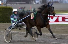 Kicki The Dancer og Troels Andersen er en av hestene jeg stoler på i dag (foto: hesteguiden.com)
