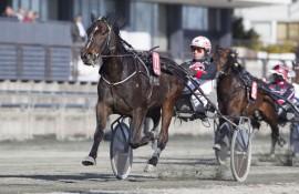 Loser Eirik Høitomt Oscar Ribb inn til ny Bjerkeseier i kveld? (foto: hesteguiden.com)