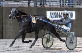 Råsterle Premance Simoni vil trolig dra fordel av tunge baneforhold i dag (foto: hesteguiden.com)