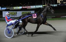 Romeo Amok varmer opp på Solvalla i karrierens andre start (foto: www.stallsteno.se)