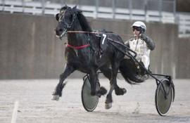 Møller Faks har gjort tre solide løp i regi Eirik Høitomt (foto: hesteguiden.com)