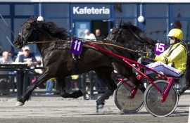 Kjetil Roe's Mjølner Oda er Folkehesten til Klosterskogen som jakter sin tredje strake seier – innfrir hun favorittstempelet i V75-4 i kveld?  (foto: hesteguiden.com)
