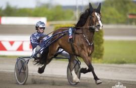 Har Øystein Tjomslands Gylden Jenta fortsatt stolpe etter V76-7 onsdag? (hesteguiden.com)