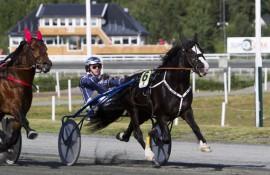 6 Tekno Odin tar turen fra Sørlandet og blir kjempefavoritt i V75-5 på Färjestad (foto: hesteguiden.com)
