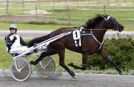 13-oddseren From Sidney og Stian Eilefsen var en nøkkelhest for oss i V65-spillet i går (foto: hesteguiden.com)