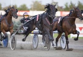 Novel Broline sammen med landets beste travtrener GV Gundersen er et av våre beste kort på Färjestad lørdag (foto: hesteguiden.com)