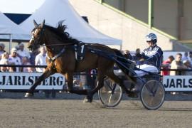 Eldodin er en av to betrodde Tjomsland-hester i dag (foto: hesteguiden.com)