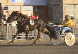 Holder Starelv Odin seg på beina og innfrir som favoritt i Boden i dag? (foto: hesteguiden.com)