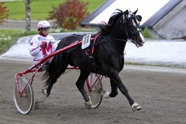 Spurter seiersvante Vladimir til seier for Thomas Mjøen i kveld? (foto: hesteguiden.com)