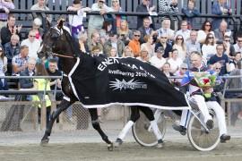 Magiccarpetride og trener Anders Pedersen i seiersdefilering etter kvalseieren i Bjerke Cup i sommer (begge foto: hesteguiden.com)