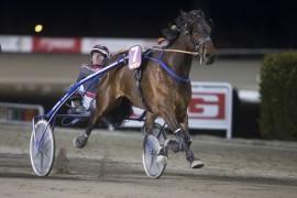Seiersmaskinen Rocknroll Fi kommer tilbake etter lang pause – er han en vinner direkte sammen med Gunnar Austevoll i V76-6? (foto: hesteguiden.com)