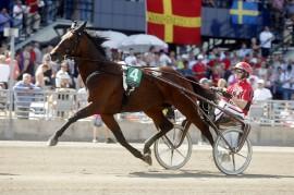 Traveling Man jakter karrierens 30. seier i V64-5 i kveld (foto: www.stallzet.se)
