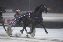 Moviestile har ikke problemer med brodder i skoene – her fra seieren på Bjerke 17. desember i fjor (foto: hesteguiden.com)