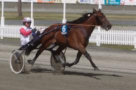Ronato har en perfekt oppgave foran seg i V76-finalen på Bjerke i k veld i jakten på årets sjette triumf (foto: hesteguiden.com)