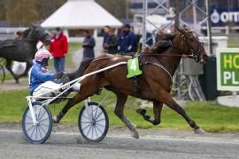 Blir det like enkelt for Soho i dag eller må hun helt ned i kjelleren for å vinne V75-4 (foto: hesteguiden.com)