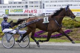 Gjentar Bonjovi B.R. prestasjonen fra det siste seiersløpet på Forus i fjor er det ingen som henter igjen Tjomsland-traveren i V75-6 (fotos: hesteguiden.com)