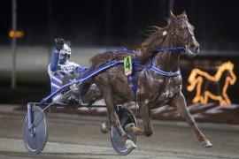 Hamptons jakter sin femte strake Bjerkeseier – blir det jubel for Hans Wilhelm Storås i kveld også? (foto: hesteguiden.com)