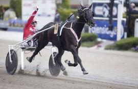 B.B.S. Sugarlight vant selveste Oslo Grand Prix i fjor – i kveld starter en ny spennende sesong for 7-åringen til Fredrik Solberg (foto: hesteguiden.com)