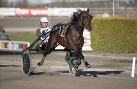 «Norskfødte» Born In The USA skal prøve å ta seg av Hans Petter Tholfsens Minneløp på Jarlsberg lørdag (foto: hesteguiden.com)