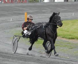 Klarer Kjetil Djøseland å holde høykapable Kleppe Snigen i trav i V75-7 i dag? (foto: djoseland.no)