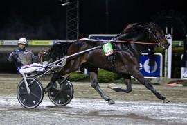 Pål Buer kommer til hovedstaden på onsdag for å kvale Greyhound d'Estino til Derbyfinale (foto: hesteguiden.com)