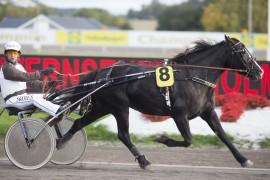 Bjørnemyr Texa var en vinner allerede i debuten som treåring – tar hun karrierens tredje pinne i kveld som syvendevalg i spillet? (foto: hesteguiden.com)