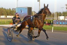 Er det som å sette pengene i banken å spille på nr 7 i den tredje avdelingen i kveld (foto: hesteguiden.com)