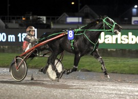 Larry er lett gjenkjennelig – onsdag får vi se om han og Kristine Kvasnes kan gjøre seg gjeldende i V76-5 på Bjerke (foto: hesteguiden.com)