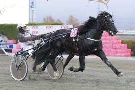 Tross galopp kunne Eirik Høitomt lose Tysvær Loke inn til V75-seier på lørdag – reprise på samme bane i kveld? (foto: hesteguiden.com)