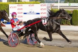 Tar Geir Flåten sin første seier etter sin sykdomsperiode med seiersmaskinen Wik Emil i V76-finalen onsdag? (foto: hesteguiden.com)