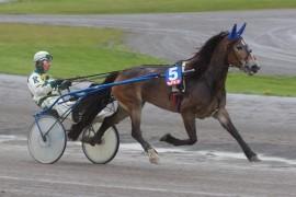 Råflotte Maurstad Mina kan til tider være lunefull, men vinner V76-1 om hun selv vil (foto: hesteguiden.com)