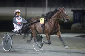 Jeg håper og tror Eirik Høitomt fikser St. Michel Decoy's fjerde strake i V75-2 på Klosterskogen i dag (foto: hesteguiden.com)