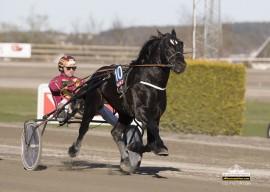 Flotte Hadland Stjernen og Jan Roar Mjølnerød blir favoritter i V64-2 på Färjestad mandag kveld (foto: hesteguiden.com)