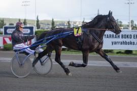 Horgen Lynet er overlegen sine konkurrenter og forhåpentligvis loser Geir Vegard Gundersen den stilige 4-åringen til seier på Bjerke i kveld (foto: hesteguiden.com)