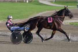 Mosaique Face og Adrian Kolgjini skal prøve å vinne en kvart million i Steinlagers æresløp på Momarken lørdag (foto: hesteguiden.com)