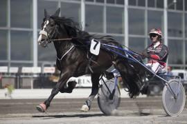 Tross et spor langt ute har Tangen Faks en fin oppgave i V76-6 sammen med Gunnar Austevoll (foto: hesteguiden.com)