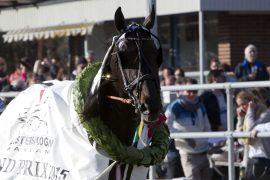 Tar Oasis Bi sin tredje seier i Klosterskogen Race i ettermiddag? (foto: hesteguiden.com)