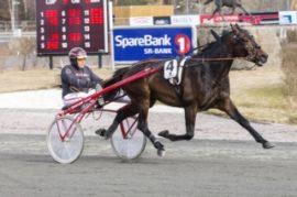 Fabian B.R. er en klassehest som trolig vinner V76-innledningen sammen med Geir Vegard Gundersen (foto: hesteguiden.com)