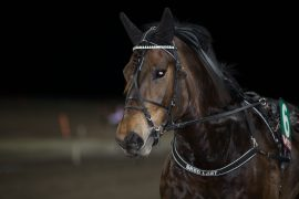 Kolbu Jonatan blir mitt holdepunkt  i V76-spillet i kveld (foto: hesteguiden.com)