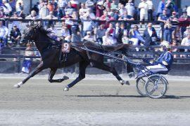 Søndag skal Nuncio prøve å forsvare fjorårsseieren i det som kanskje er tidenes beste Elitlopp (foto: hesteguiden.com)