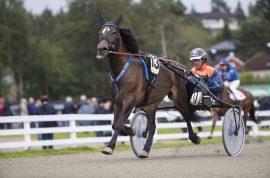 Väskinge Anna har vist stor fremgang og Olav Mikkelborg og god tro på at svenskehoppa kan ta seg av V76-1 i kveld (foto: hesteguiden.com)