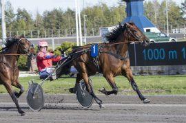 Bajazzo H.R. imponerte stort ved å debutere med seier på 16 blank sammen med Åsbjørn Tengsareid (fotos: hesteguiden.com)